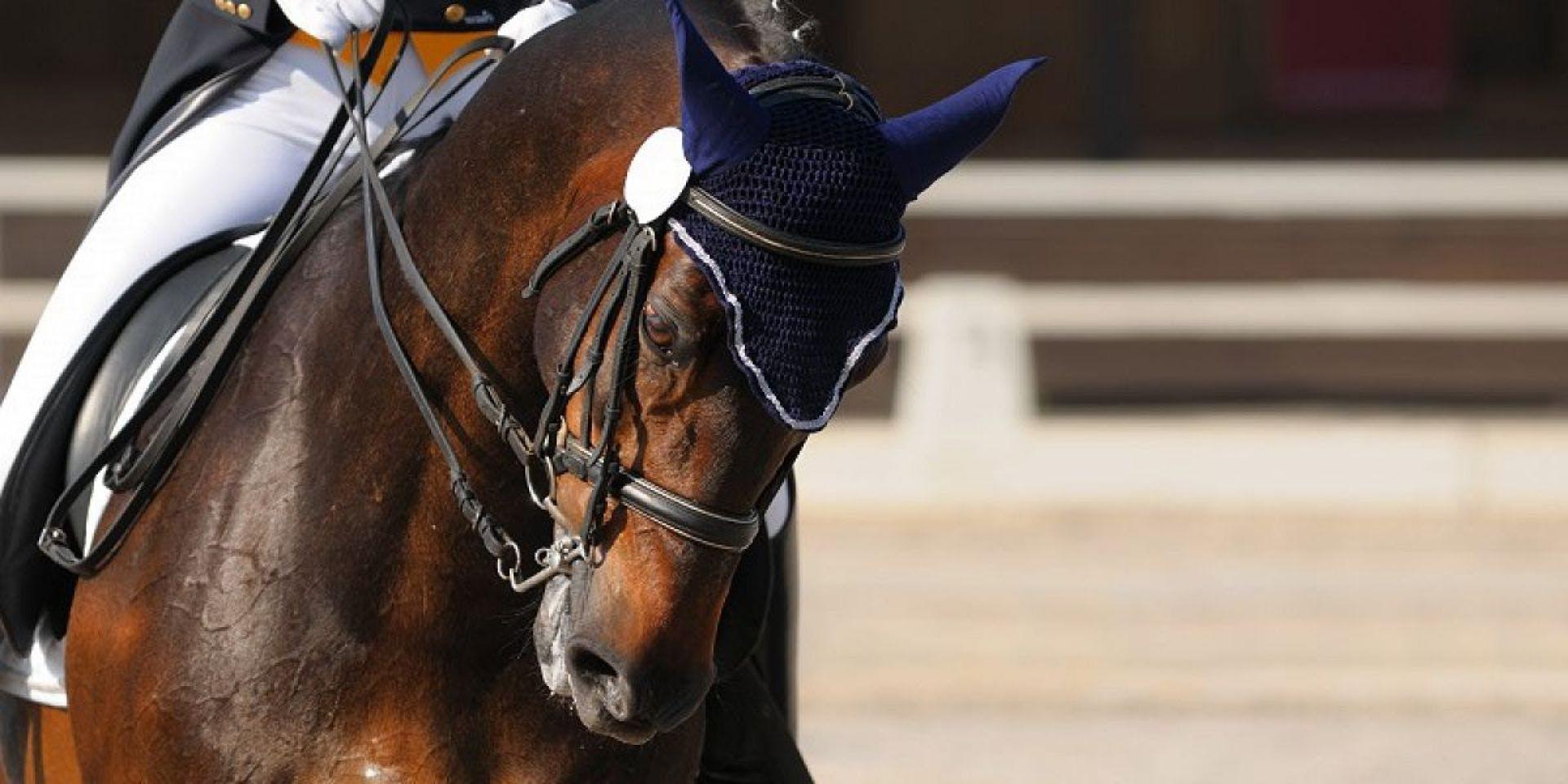 Cara Shardlow Dressage & Beckside Livery Stables